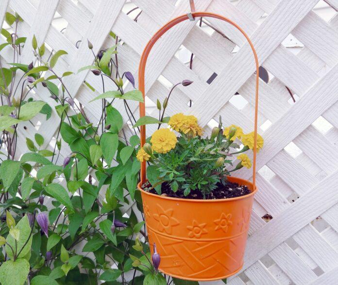 best DIY for garden