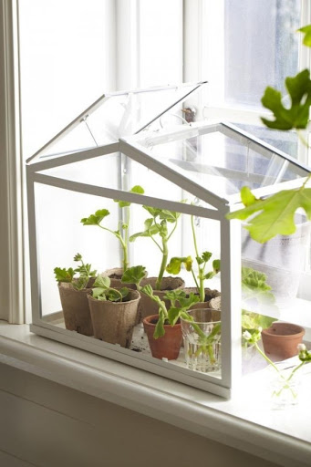 Mini Greenhouse and Plant Holder